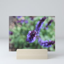 Purple Salvia Mini Art Print
