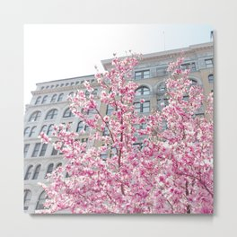 NYC Cherry Blossoms Metal Print