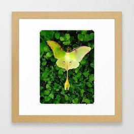 Luna Moth Watercolor Framed Art Print
