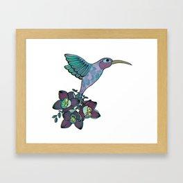 Orchid Hummingbird Framed Art Print