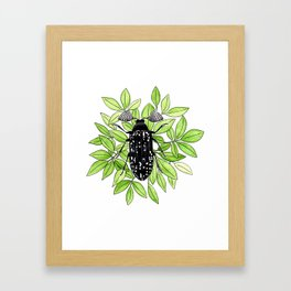 Feather Horned Beetle Framed Art Print