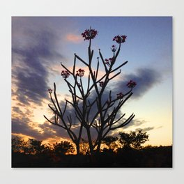 Flor de los Ancianos Canvas Print