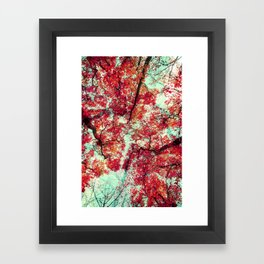 Candied Fall Framed Art Print