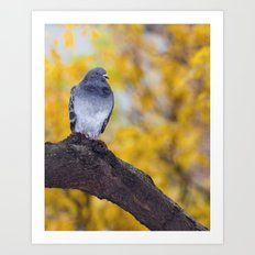 Rock Pigeon in Autumn Art Print