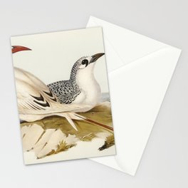 Red-tailed Tropic Bird (Phaeton phoenicurus)illustrated by Elizabeth Gould (1804-1841) for John Goul Stationery Cards