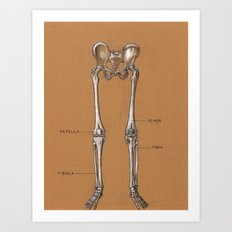 Jesse Young's Human Anatomy Drawing of Skeletal Structure of the Lower Body (Circa 2005) Art Print