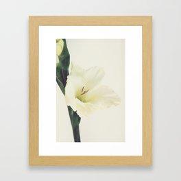Sword Lilly - Gladiolus - JUSTART © Framed Art Print