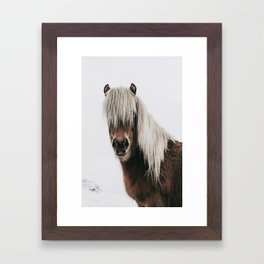 Icelandic Horse - Pony Photo Framed Art Print