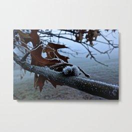 Frosted Oak Metal Print