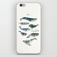 gray iPhone & iPod Skins featuring Whales by Amy Hamilton