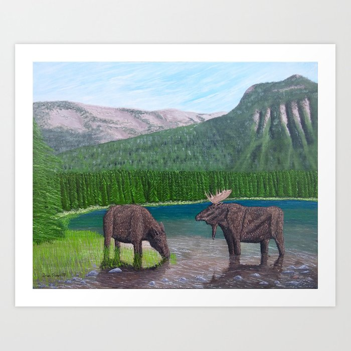 Moose at Akamina Lake Art Print