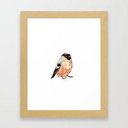 Orange and Black Bird Framed Art Print