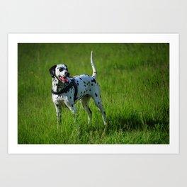 Brave Stand. Kokkie. Dalmatian Dog Art Print