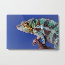Chameleon color blue Metal Print