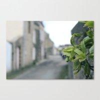 plant Canvas Prints featuring Plant by thoregan