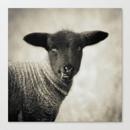 YOUNG LAMB - OLD FRIENDS COLLECTION Canvas Print
