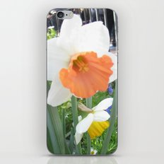 Daffodil iPhone & iPod Skin