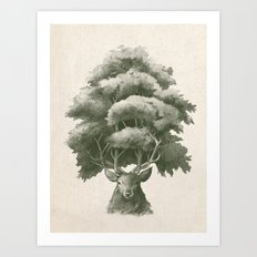 Old Growth  Art Print