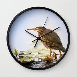 Crowned Night-Heron- Hammond pond Wall Clock