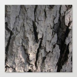 bark abstact no5 Canvas Print