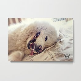 Playful One Metal Print