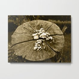 Old log Metal Print