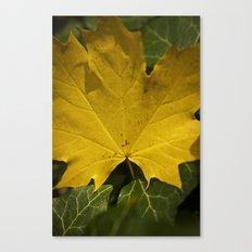 Yellow leaf Canvas Print