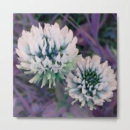 Purple clover Metal Print