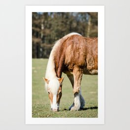 Grazing Horse Art Print