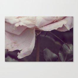 Vintage rose #3 Canvas Print