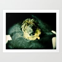 DACKEL DOG#2 Art Print