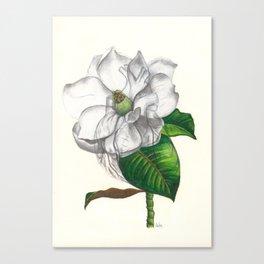 Heart of a Magnolia Canvas Print