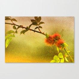 Robin's Pincushion Canvas Print