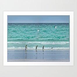 Falkland Island Seascape with Penguins Art Print