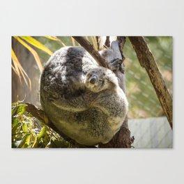 Mama and Baby Koala Bear Canvas Print