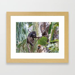 Pair of Howler Monkeys watching Framed Art Print