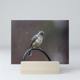 Tufted Titmouse shaking off the rain Mini Art Print