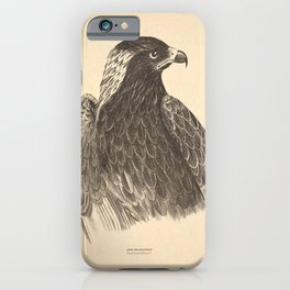 Vintage Print - Companion to Gould's Birds of Australia (1877) - Black-Breasted Buzzard iPhone Case