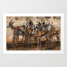 Springbok Herd Art Print