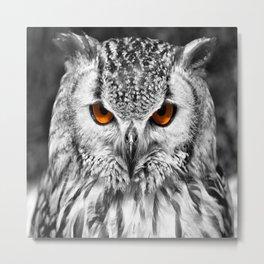 The Eyes have it 2 Metal Print