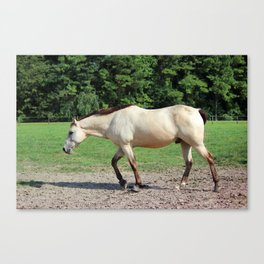 Off On A Trot Canvas Print