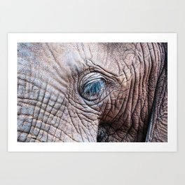 The Elephant Sanctuary 02 Art Print