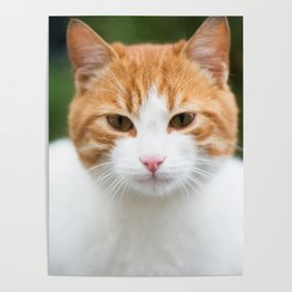 Cat face Poster