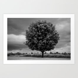 Tree - Conover, NC Art Print