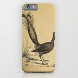 Lyre Bird4 iPhone Case