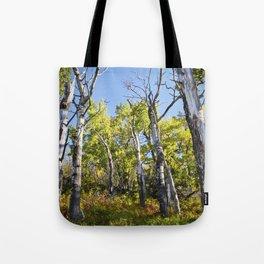 Birch in Fall Tote Bag