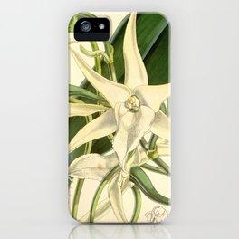 Angraecum sesquipedale iPhone Case
