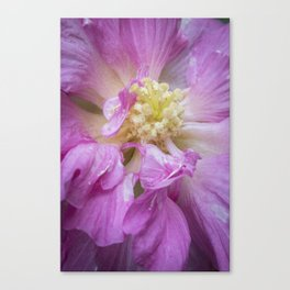 Dark Pink Beauty - Flower Photography Canvas Print