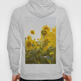 Sunflower Field Hoody