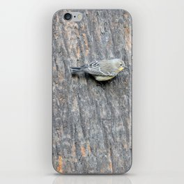 TEXTURES -- Warbler on Palm Bark iPhone Skin
